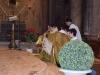 Te Deum Duomo-2017-0019